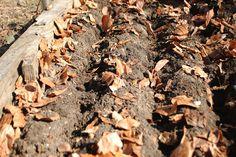 Gradinaritul printre frunze uscate