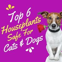 TOP 6 HOUSE PLANTS SAFE FOR CATS AND DOGS - An Enchanted Florist Blog