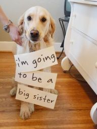 Cute! Pregnancy announcement photography features family dog. - Truffle would never stand for this but its a super cute idea. Shed also probably be mortally offended that we didnt think she was enough and therefore should stay an only child.