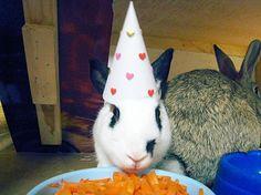 Animais/Aniversário/Happy/Cute