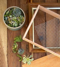 38 Creative Framed Pots Ideas To Your Inspire. Fill in all the holes with potted succulents and you've got a simple DIY vertical succulent garden. It is possible to also hang planters from frees. Succulent Frame, Vertical Succulent Gardens, Succulent Wall Art, Succulent Cuttings, Hanging Succulents, Succulents Garden, Plant Wall, Propagate Succulents, Hanging Plants