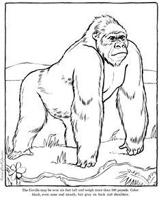 koko the gorilla black and white coloring sheet | Gorilla coloring page - Animals Town - animals color sheet - Gorilla ...