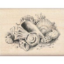 illustrated seashells sketches collection