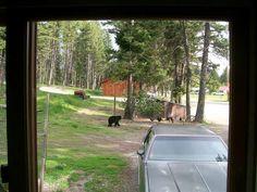 Bear 6/2014
