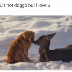 32 Animal Memes That Will Brighten Your Day Funny Animal Pictures, Cute Funny Animals, Cute Dogs, Funniest Animals, Fun Dog, Animals And Pets, Baby Animals, Mundo Animal, Dog Memes