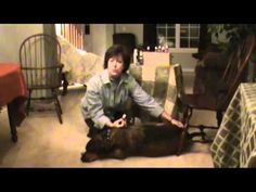 Essential Oils on Dogs animals-and-essential-oils