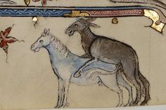 Cómo se hace una mula. San Alberto Magno, De animalibus, Paris s. XIV. BnF…