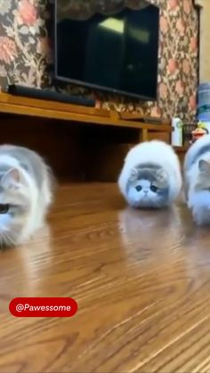 Funny Animal Quotes, Animal Jokes, Funny Animal Videos, Cute Funny Animals, Cute Baby Animals, Funniest Animals, Funny Pets, Cute Cats And Kittens, Kittens Cutest