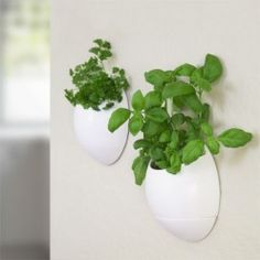 Self Watering Herb Pot. Self-watering herb pot. Grow your own herbs and plants indoors. These self-watering pods are easy to install and remove from any wall or window with integrated adhesive stripes. Comes as a set of 2 for indoor use only. Herb Garden Planter, Herb Planters, Herb Pots, Hanging Planters, Herbs Garden, Plant Pots, Eco Pods, Herb Wall, Deco Originale