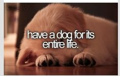 Want a dog for its entire life...R.C. was born in front of me & will be with me til the end
