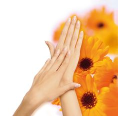The Swiss marigold's protective forcefor your hands. The flavonoïds contained in marigold have the capacity to stimulate the cells of the connective tissue and to accelerate the wound healing. Besides, they inhibit the proliferation of bacteria.   The marigold reduces irritations and disinfects. It calms sensitive, irritated and strongly sollicitated skin and boosts its resistance.  www.biokosma.ch