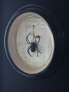 framed spider matthew mead