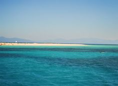 Une journée pour découvrir la vie sous-marine de la grand barrière de corail... #fantastic Site 1 : Hastings reef Site 2 : Michaelmas Cay   #greatbarrierreef #turtle  #shark  #nemo  #diving  #plongée  #bluesea  #australia  #Cairns  #Queensland  #boattrip  #australie #oceanview  #marine  #landscape  #corail  #travelgram  #travellers  #wandurlust  #instapic  #gopro  #underwater  #boat  #beach  #summer  #TGT_travel AUSTRALIA 2015 by thegreenturtle http://ift.tt/1UokkV2