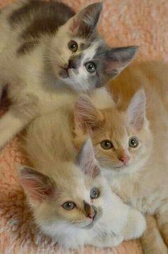 What cute kittens