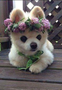 Corona de flores :3