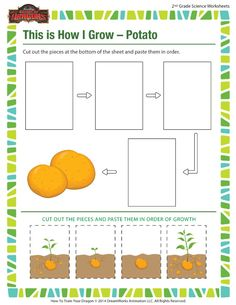 This is How I Grow – Potato - Learn Science with Potatoes 2nd Grade Worksheets, Science Worksheets, Worksheets For Kids, Grow Potatoes In Container, Weather Worksheets, Summer Courses, Teaching Vocabulary, Kindergarten Science, Montessori Activities
