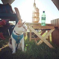 Sunday morning #campingwithcats