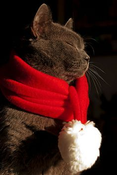 Warm and fuzzy holiday wishes!
