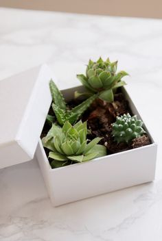 Francine's Place: EASY DIY HOME PROJECT: SUCCULENTS IN A BOX