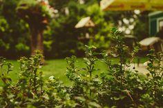 Exciting Backyard Home Remodeling Projects - Mares Dow - General Contractors Eco Garden, Lawn And Garden, Garden Plants, Pergola Metal, Landscape Design, Garden Design, Low Maintenance Landscaping, Landscaping Tips, Garden Equipment