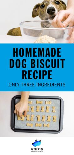 Our homemade dog treats are the perfect way to treat your dog to something special and can also be used as a reward for training. Dog Biscuit Recipes, Dog Treat Recipes, Dog Food Recipes, Sweet Recipes, Cake Recipes, Homemade Dog Treats, Pet Treats, Healthy Dog Treats, Dog Friendly Cake