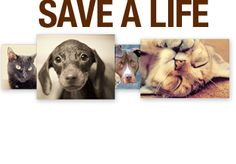Help save a life!    Thousands of dogs, cats and other domestic animals are abandoned each year. Only a fraction of these animals are able to find a home. If you're looking for a pet, choose to adopt and help save a life!