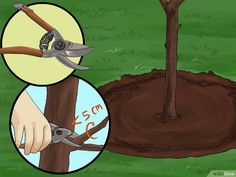 3 Ways to Create Tree Flower Beds - wikiHow