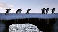 La moitié des animaux sauvages a disparu en moins d'un demi-siècle.