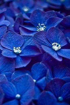 blue flowers blue flowers wallpaper wallpaper wallpaper hd