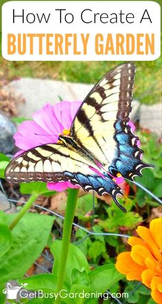 Creating a flower garden with butterflies in mind is fun and rewarding! Learn how to create a butterfly friendly garden, everything from how to plan a butterfly garden to choosing the best flowers to attract butterflies. (AD)
