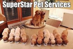 Now this is a sweet Family!!! www.superstarpetservices.com