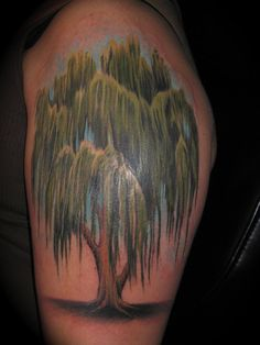 4b8ee6d13 What does willow tree tattoo mean? We have willow tree tattoo ideas, designs,  symbolism and we explain the meaning behind the tattoo.