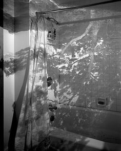 Abelardo Morell _ Tree in Bathroom, Little Compton, RI, 1999