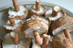 Edible chocolates by Andie's Specialty Sweets (yes! these mushrooms are chocolate!)