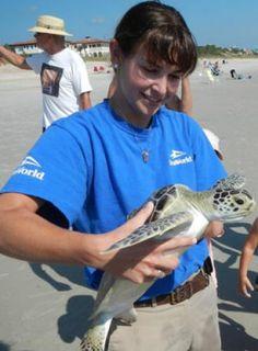 The SeaWorld Orlando Animal Rescue Team returned two green sea turtles to their natural environment. So far this year, SeaWorld Orlando has rescued 51 and returned 43 sea turtles! #animal #animalrescue #seaturtle #seaworld