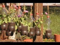 Como fazer para plantar hortaliças em garrafa pet