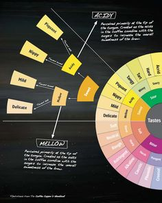 A Guide to the Coffee Taster's Flavor Wheel
