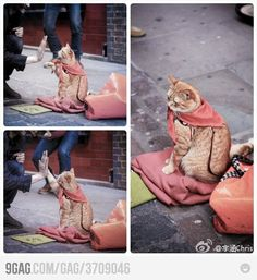 Oh my gosh. It's a cat that gives high fives on the street for tips. Oh my gosh.