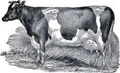 Vintage Farmhouse Image Cow | The Graphics Fairy