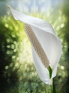 Plantar, Indoor Plants, Flora, Garden, Co Dělat, Beauty, Html, Health, Inside Plants