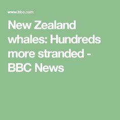 New Zealand whales: Hundreds more stranded - BBC News
