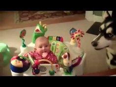 Hoe laat je een baby stoppen met huilen? #Husky