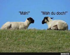 Mäh! | Lustige Bilder, Sprüche, Witze, echt lustig