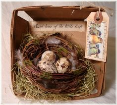 Nest Display - Used a small shadow box with some vintage egg print paper behind and decorative paper on the sides.
