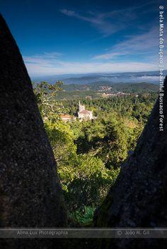Um quarto com uma vista | A room with a view Estão já próximos os próximos Workshops de Fotografia In Vivo, a raiz e o tronco, na Mata Nacional do Buçaco. Para a luz da Primavera!