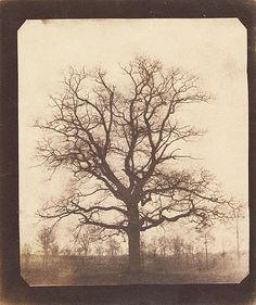 William Henry Fox Talbot - An Oak Tree in Winter, probably 1842 - 1843, Salt print