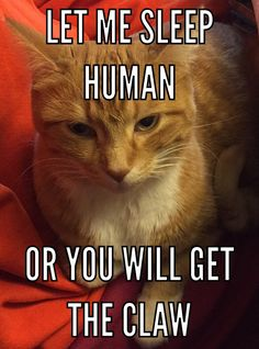 The Funniest Tweets About Cats In BlazePress Humor - The 27 funniest tweets about cats in 2016