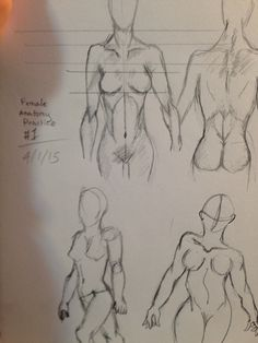 Anatomy and proportions