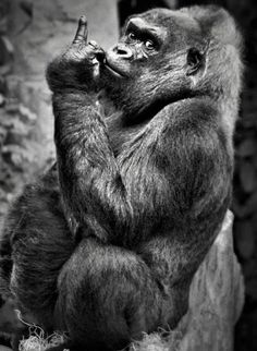 Funny Animals Pictures Monkey Ideas For 2019 Primates, Mammals, Animals And Pets, Funny Animals, Cute Animals, Beautiful Creatures, Animals Beautiful, Photo Animaliere, Tier Fotos