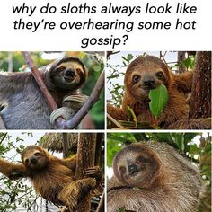 Animal Memes That Are Just Way Beyond Funny - 22